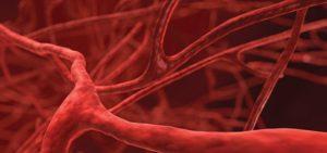 vasi sanguigni